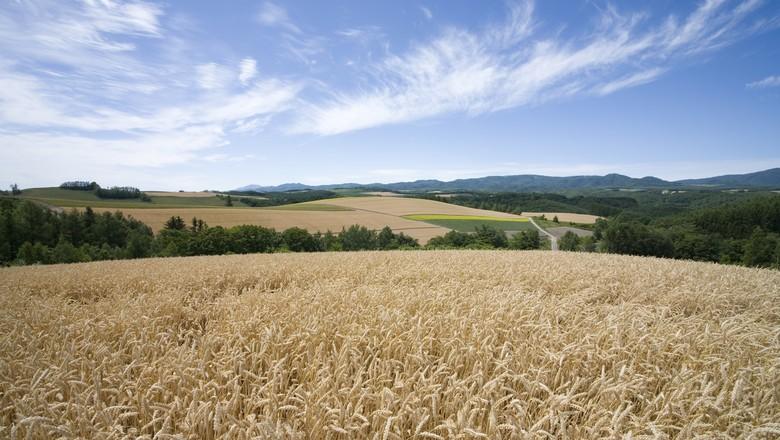Clima favorece plantio de milho no Rio Grande do Sul
